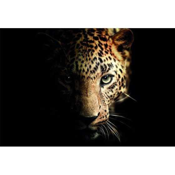 Glasschilderij luipaard