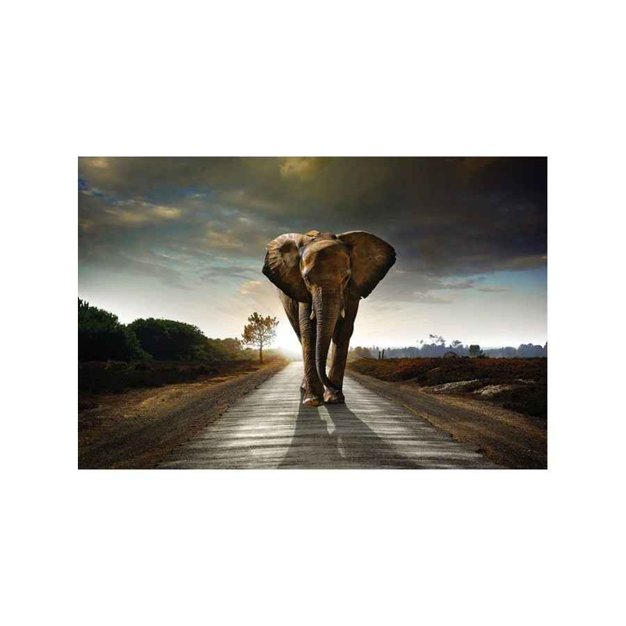 Glasschilderij olifant