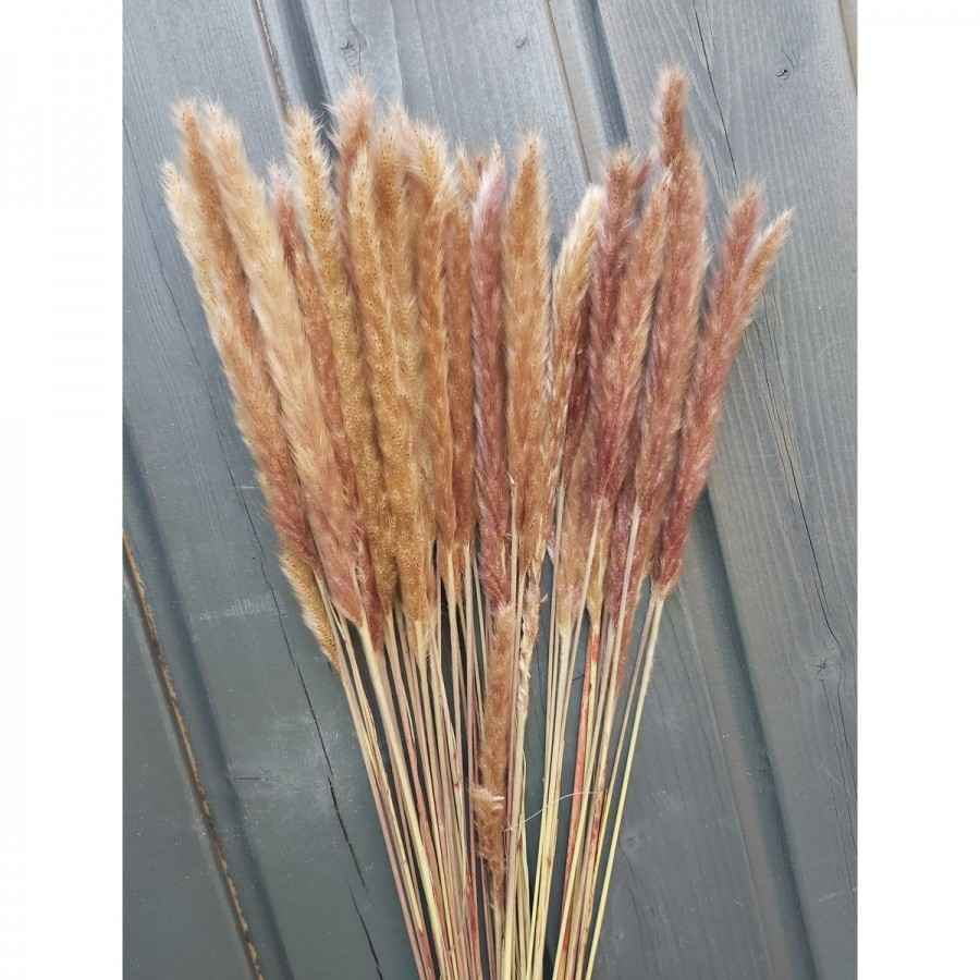 Fluffy Pampas naturel 60 / 75 cm